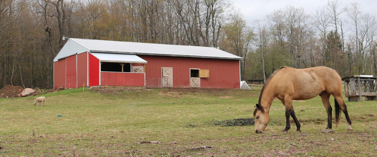 Welcome to Beaver Lake Farm!